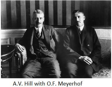 A_V_Hill-and-O_F_Meyerhof