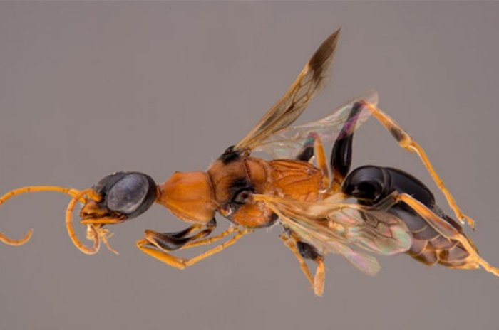 Harry Potter Wasp